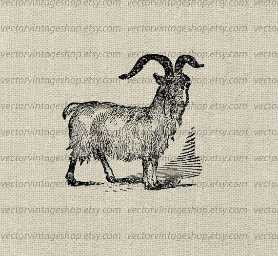 Goat Vector Clipart Instant Download, Horned Cashmere Goat.