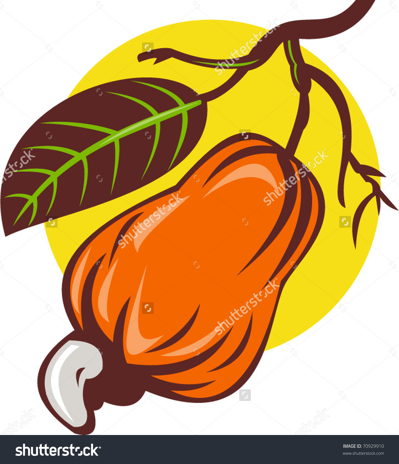 Vector Illustration Cashew Nut Fruit Leaf Stock Vector 70929910.