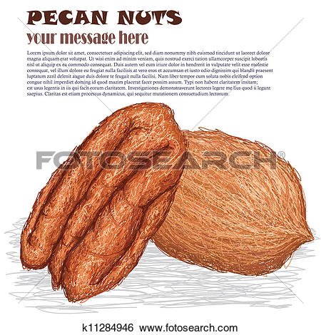Clipart of cassava k11284222.