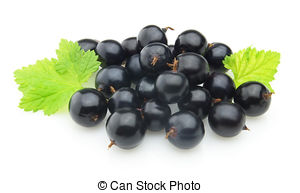 Blackcurrant Stock Photo Images. 3,459 Blackcurrant royalty free.