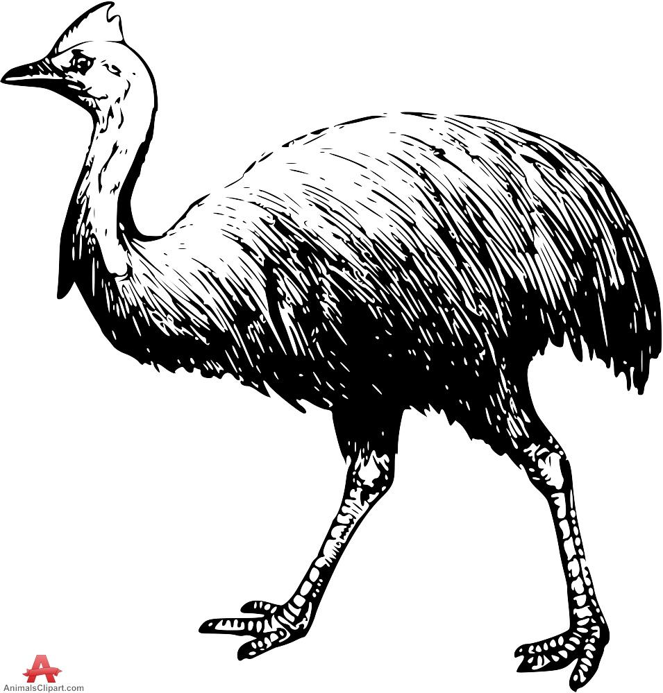 Cassowary Bird Clipart Drawing.