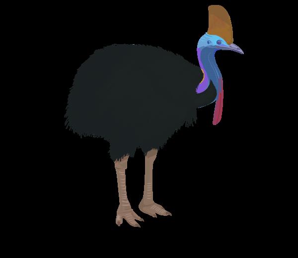 Weekly Bird.
