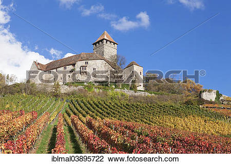 "Stock Photo of ""Lichtenberg Castle, vineyard, in autumn."