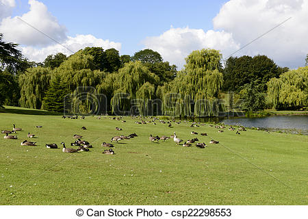 Stock Images of birds on meadows in Leeds castle park, Maidstone.