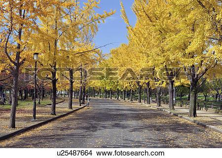 Stock Photo of Osaka Castle Park in Autumn u25487664.