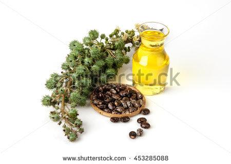 Castor Oil Bottle Castor Fruits Seeds Stock Photo 356874347.