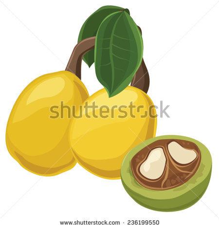 Castor Oil Ricin Fruit Seeds Glass Stock Vector 247809472.