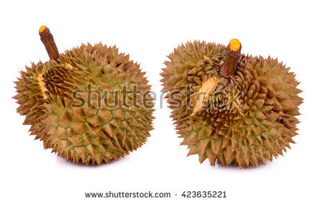 Castor Seeds Fruit Ricin Vector Illustration Stock Vector.