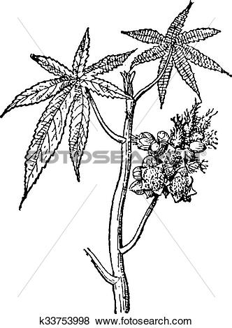 Clip Art of Castor common or Castor oil plant, vintage engraving.