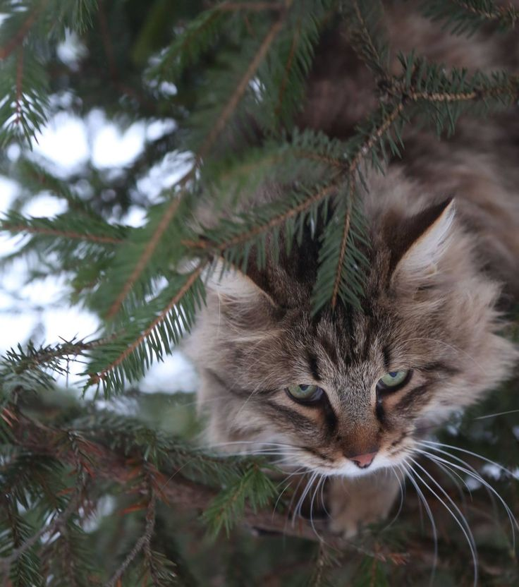 1000+ images about Cute Cats on Pinterest.