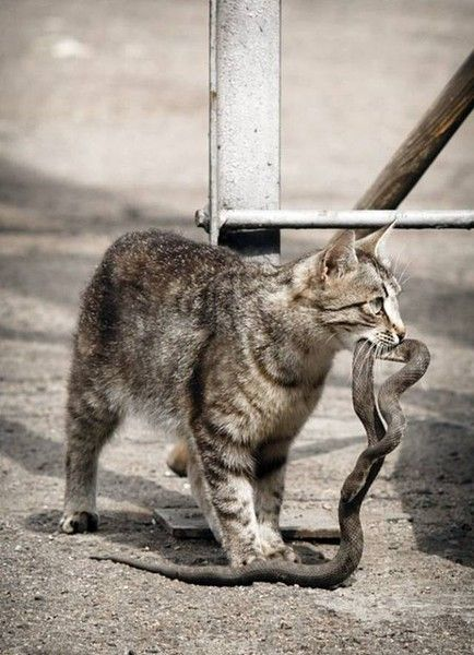 1000+ images about Kitty Cats on Pinterest.