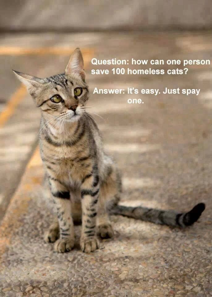 1000+ images about spay/neuter on Pinterest.