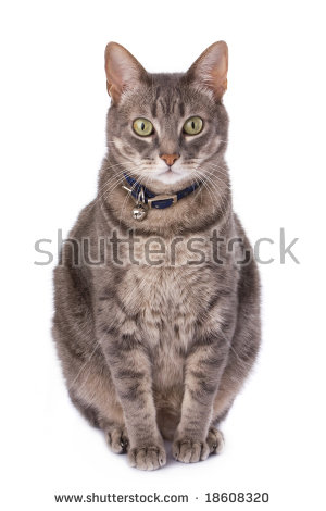 Cat Bell Stock Images, Royalty.