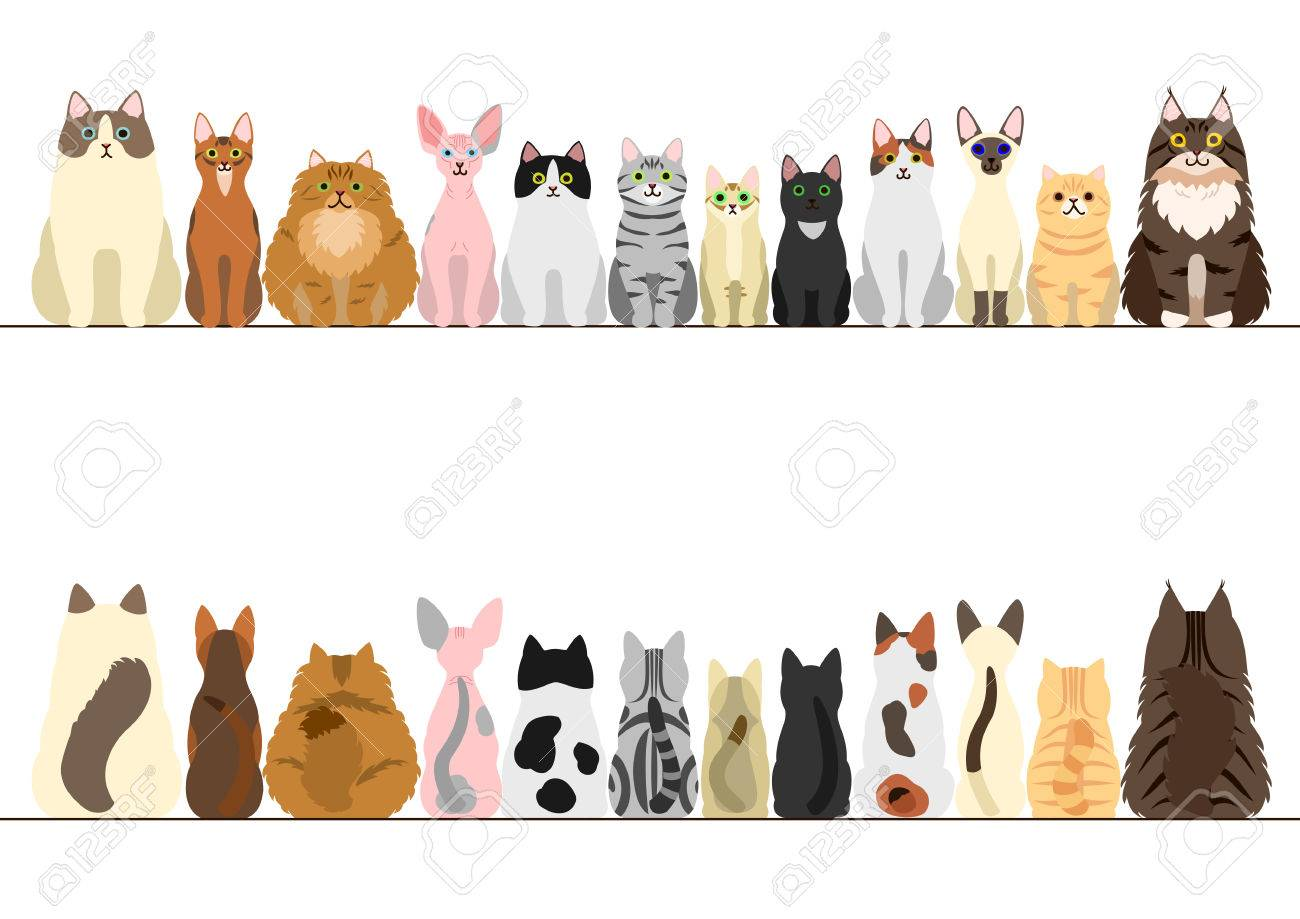 cats border set, front view and rear view.