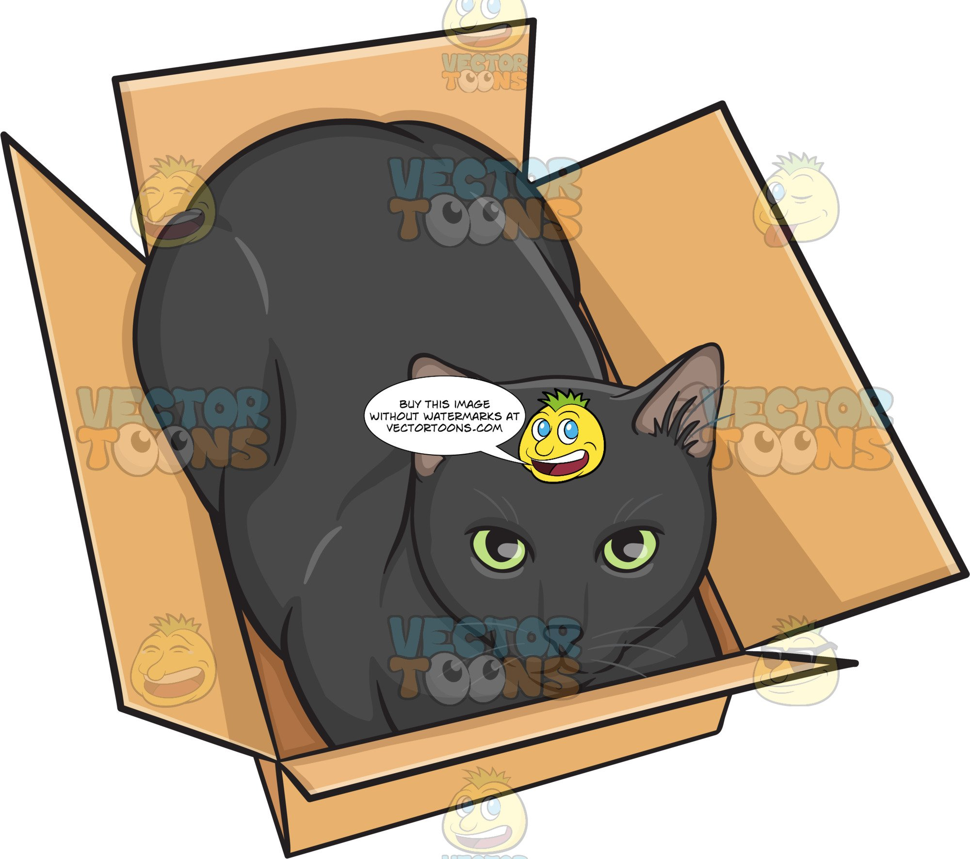 A Black Cat In A Box.