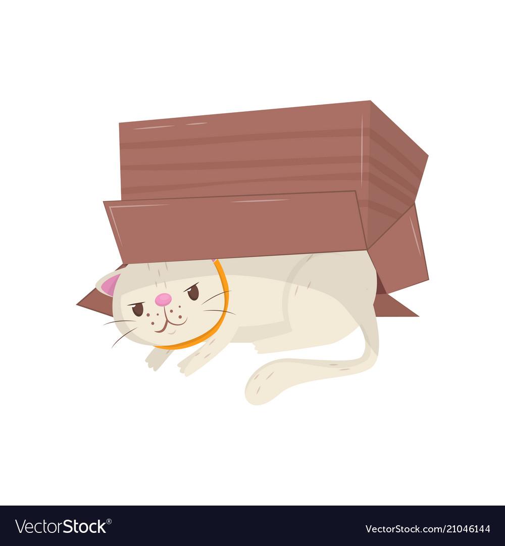 Funny cat hiding under cardboard box kitten with.