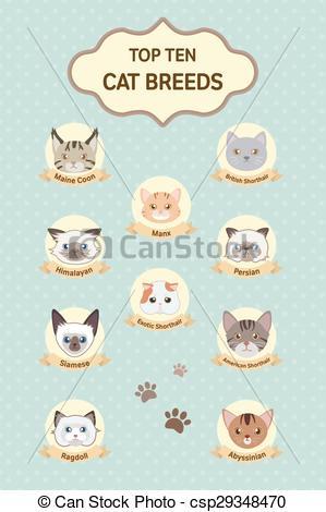Vectors Illustration of pastel top ten cat breeds poster.