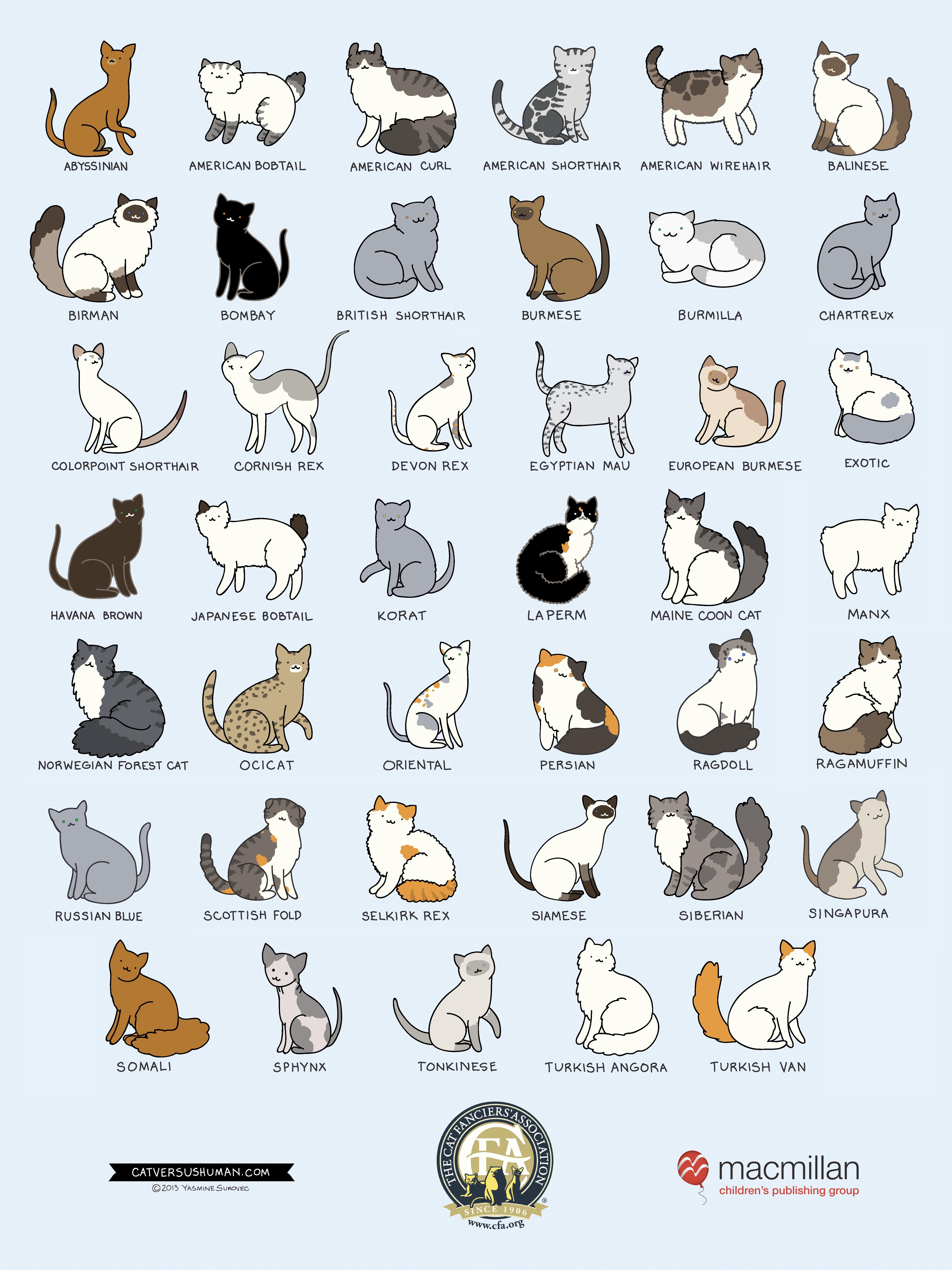 CAT BREEDS : cats.