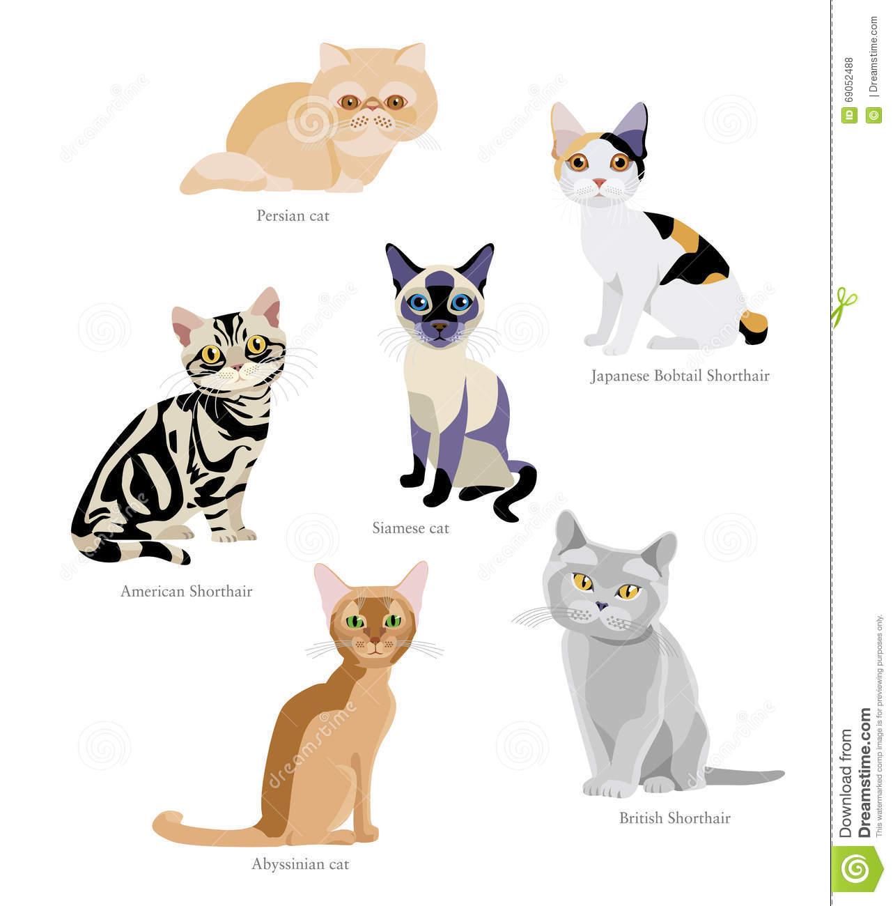 Cat Breeds Stock Vector.