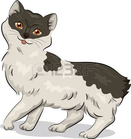 3,022 Cat Breed Stock Vector Illustration And Royalty Free Cat.