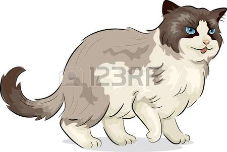 3,130 Cat Breeds Stock Vector Illustration And Royalty Free Cat.