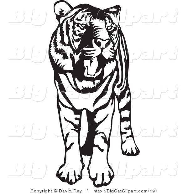 Big Cat Vector Clipart of a Standing Black and White Tiger with.