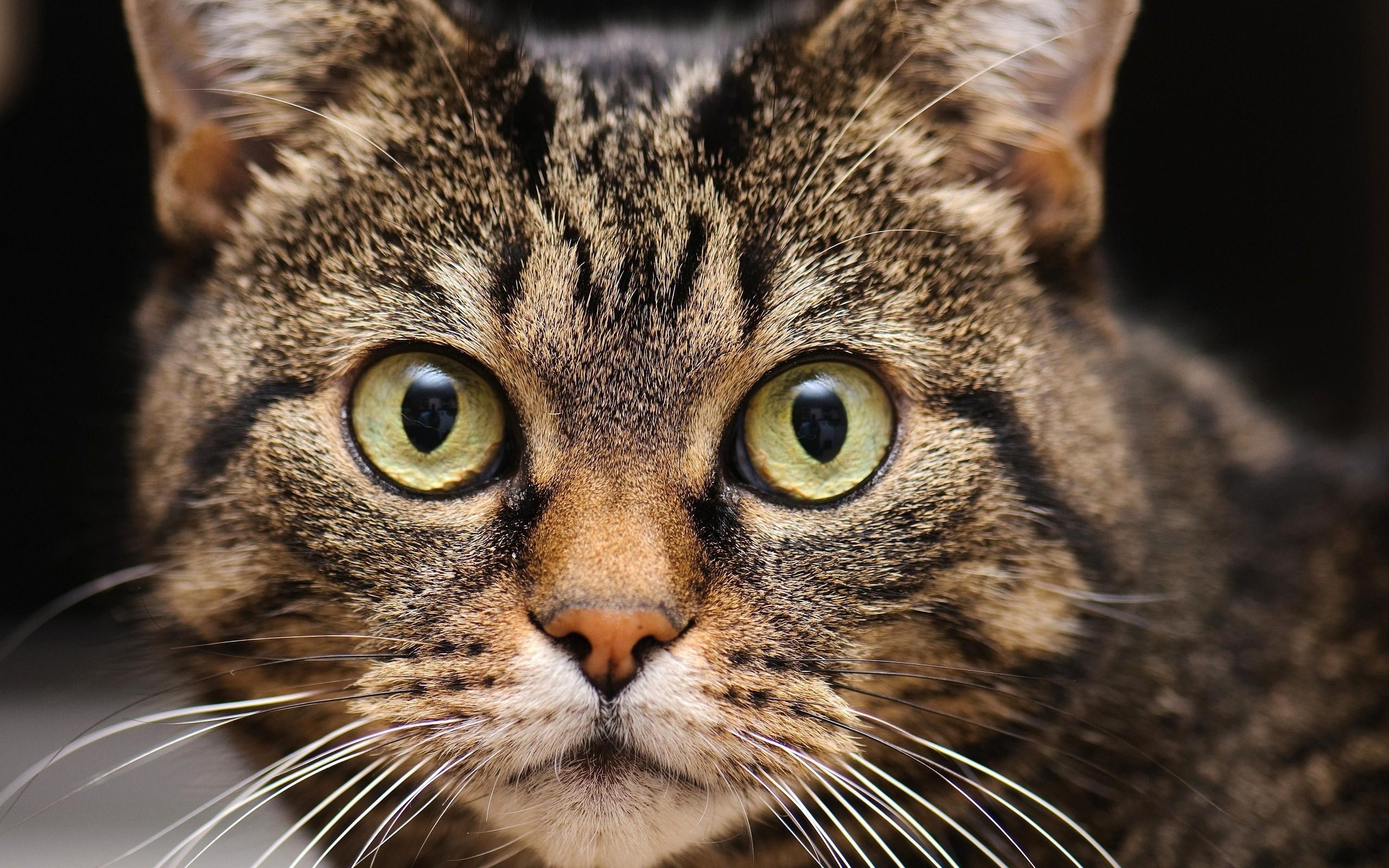 Cat Face.