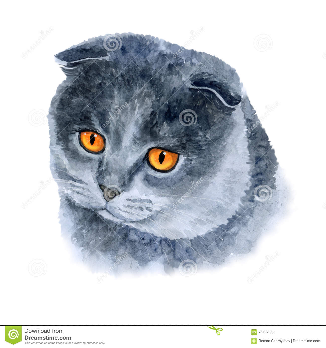 Watercolor Closeup Portrait Of Scottish Fold Cute Cat On White.