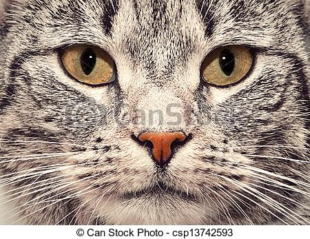 Stock Photographs of Cat face close up portrait.