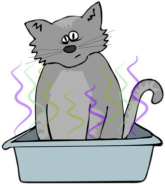 How to Get Rid of Cat Litter Box Odor?.