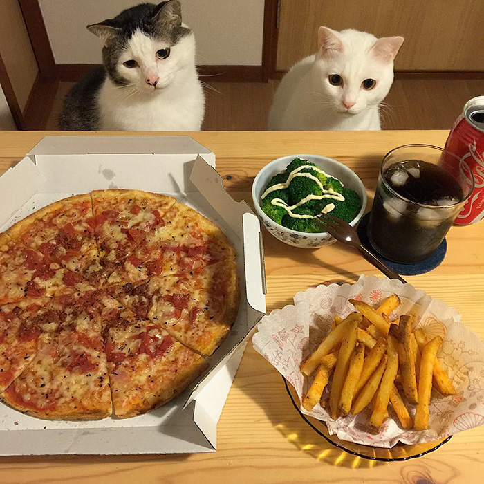 Japanese Couple Captures Every Time Their Cats Watch Them Eat.