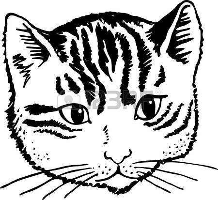 16,801 Cat Face Stock Vector Illustration And Royalty Free Cat.