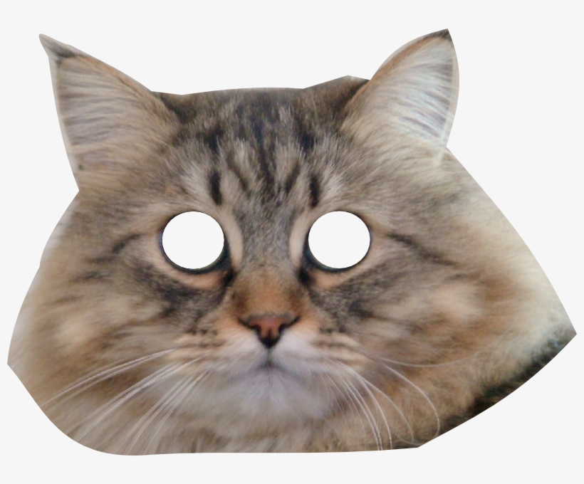 Cats Face Png.
