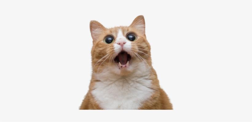 Funny Cat Png.