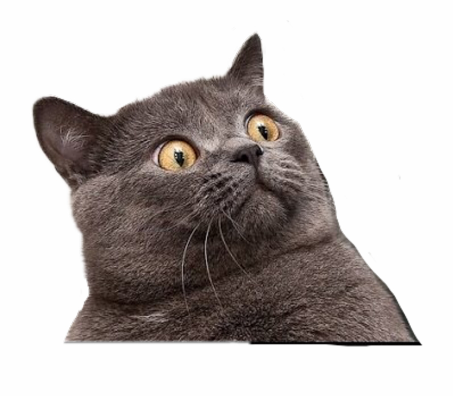 Funny Cat Clipart With A Transparent Background Png.