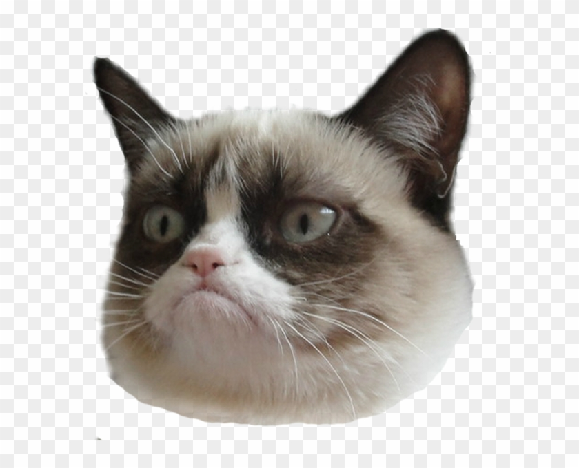Funny Cat Face Png.