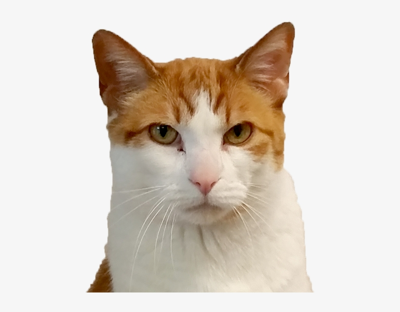 Cat Face Png.