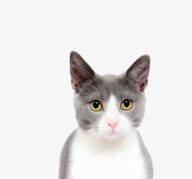 Cat Face Closeup PNG, Clipart, Animal, Cat Clipart, Closeup Clipart.