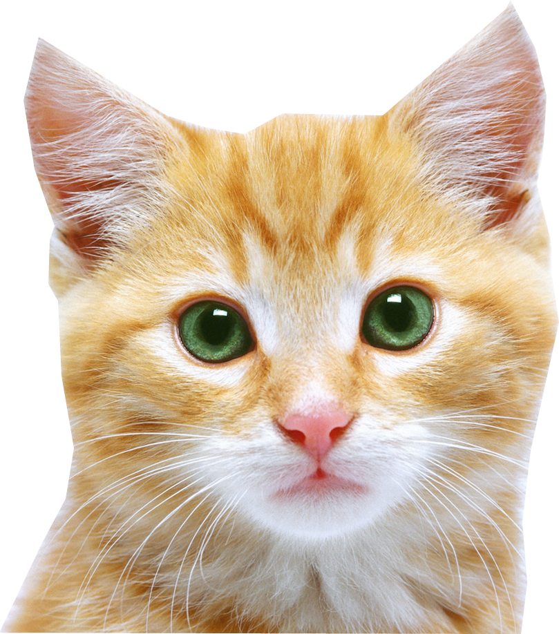 Cat face png #40377.