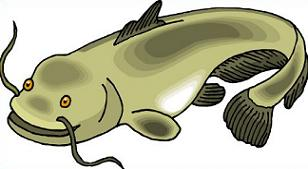 Free Catfish Cliparts, Download Free Clip Art, Free Clip Art on.