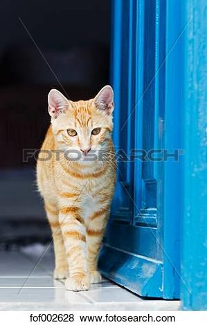 Pictures of Europe, Greece, Cyclades, Oai, Santorini, Cat standing.