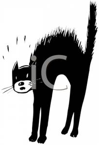 of a Black and White Cat with His Back Arched and Hair Up on His.
