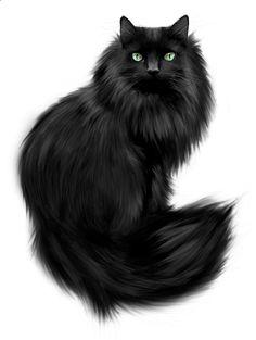 Cat Transparent PNG Clipart.