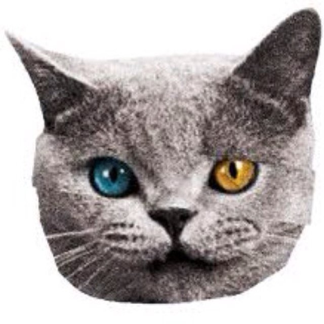 Cat Head Png (+).