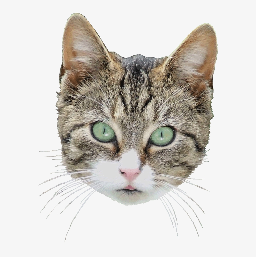 Cat Head Png , (+) Pictures.