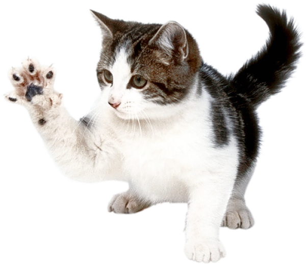 Cat Hand Png.