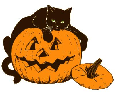 cat on Halloween pumpkin.