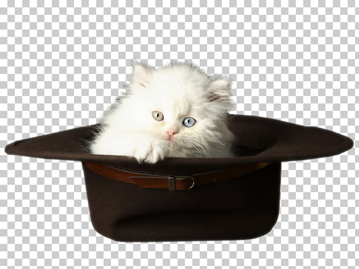 Kitten Cat, Cat in the Hat PNG clipart.