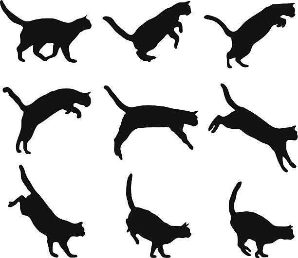 Best Cat Jumping Illustrations, Royalty.