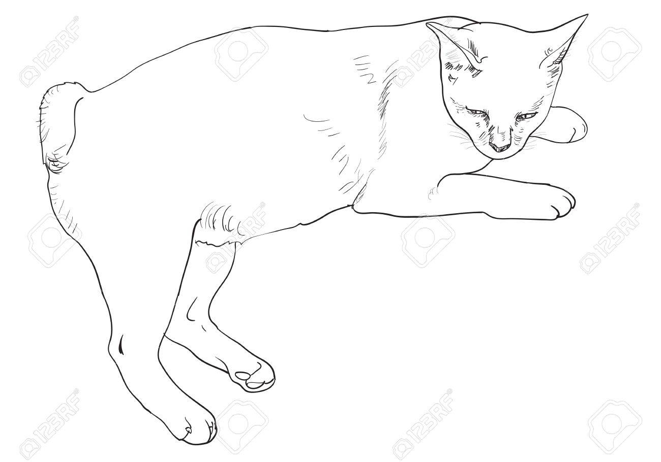 Short tail cat laying down and nearly fallen a sleep.